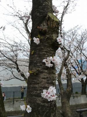 お花見19.jpg