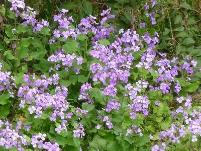 お花見22.jpg