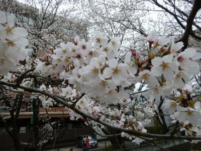 お花見24.jpg
