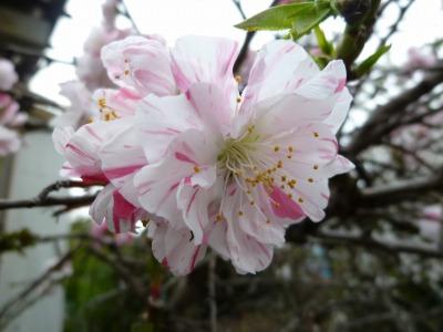 お花見36.jpg
