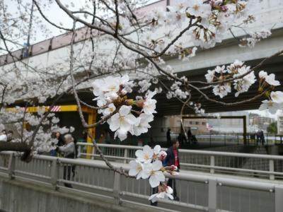 お花見4.jpg