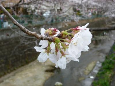 お花見41.jpg