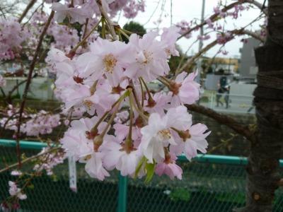 お花見42.jpg