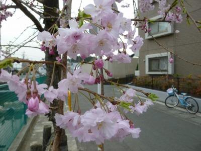 お花見43.jpg