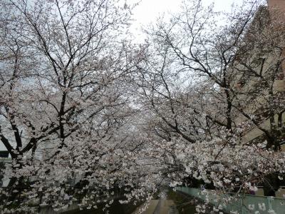お花見7.jpg