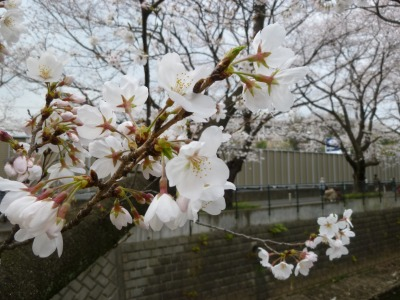 お花見9.jpg