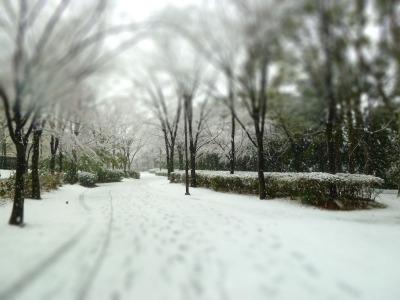 雪21-tiltshift.jpg