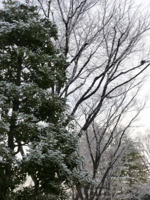 雪35.jpg
