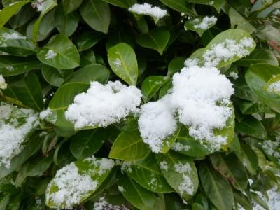 雪37.jpg