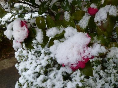 雪38.jpg