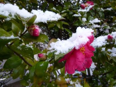 雪39.jpg