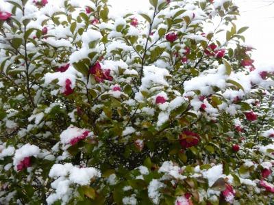 雪40.jpg