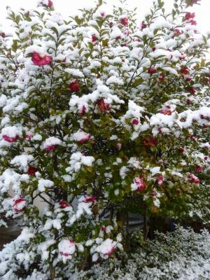 雪41.jpg