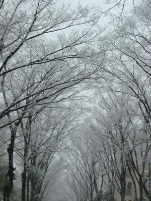 雪5.jpg